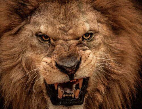 ¿Filmarías una película con 30 leones sin seguro?