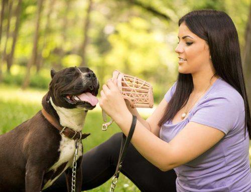 Perros Potencialmente Peligros (¿o puro amor?)
